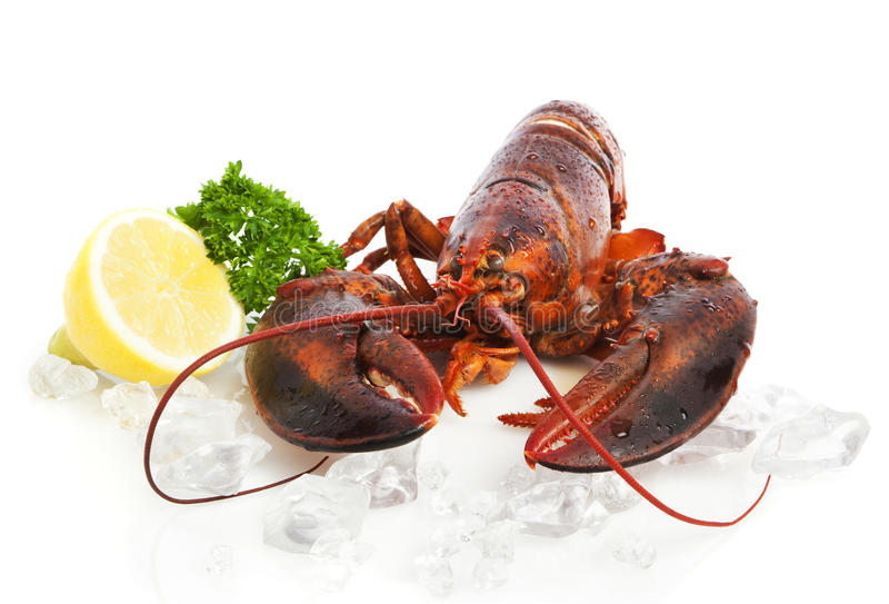 Red Lobster royalty free stock photo