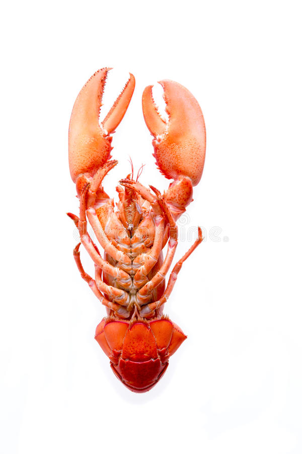Red Lobster with Cooked Bottom Isolated on White. Close up Fresh Appetizing Red Lobster with Cooked Bottom Isolated on a White Background stock photo