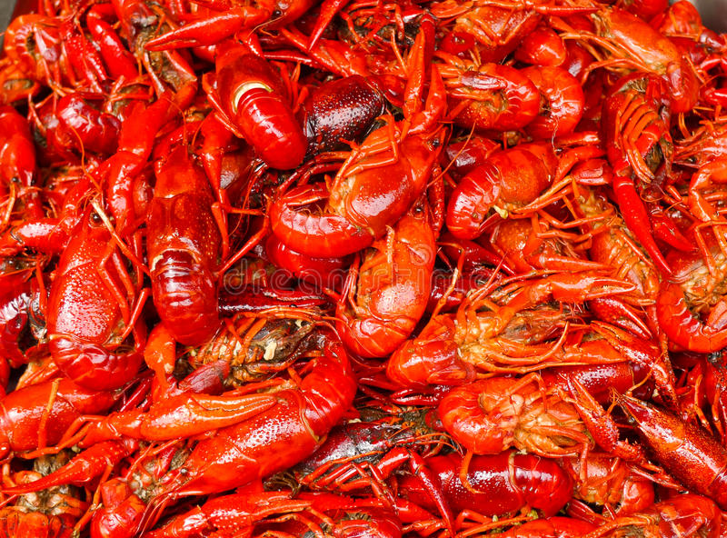 Red Lobsters Royalty Free Stock Photo