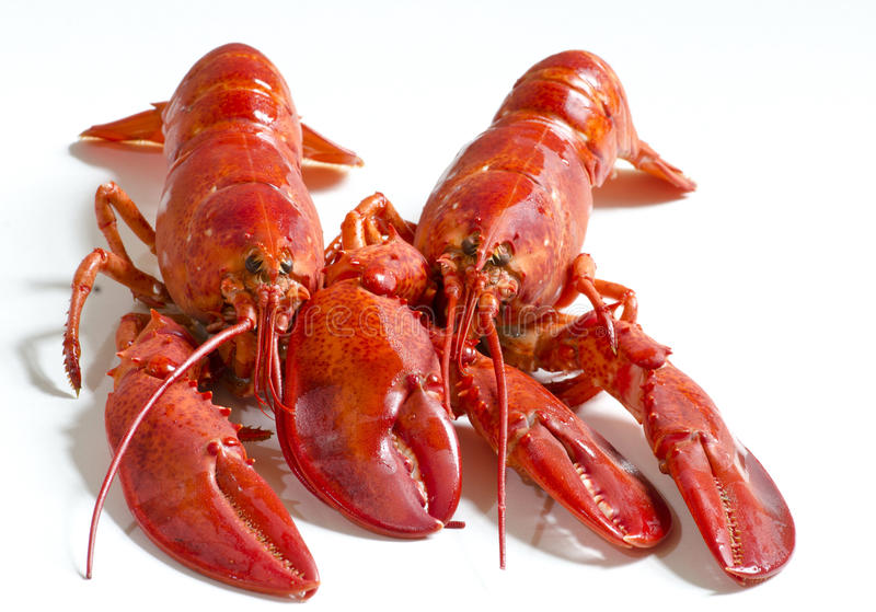Download Red lobsters stock photo. Image of dining, background - 41372858