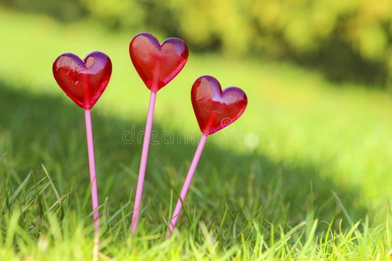 Red lollipops in heart shape, on fresh green grass stock images