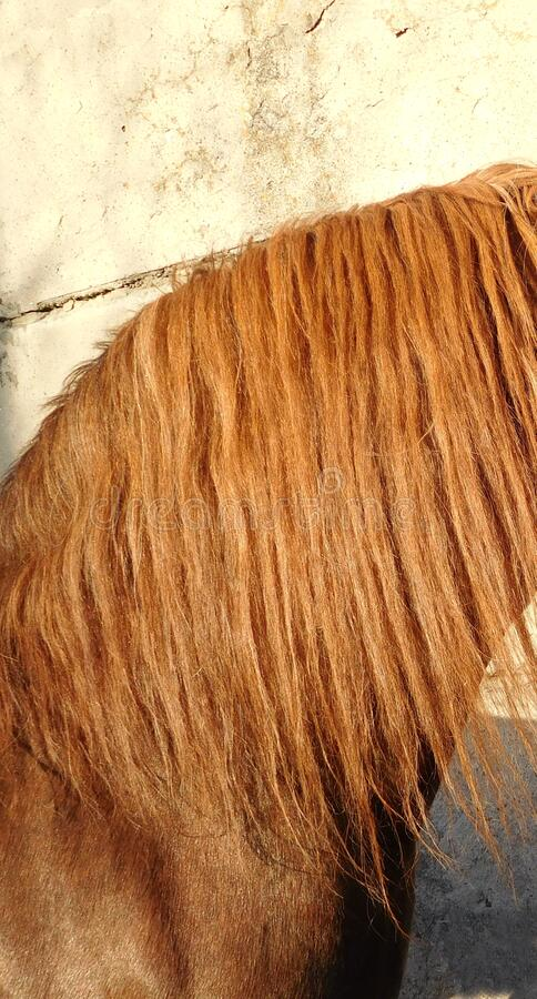 Red long mane horse texture royalty free stock photo