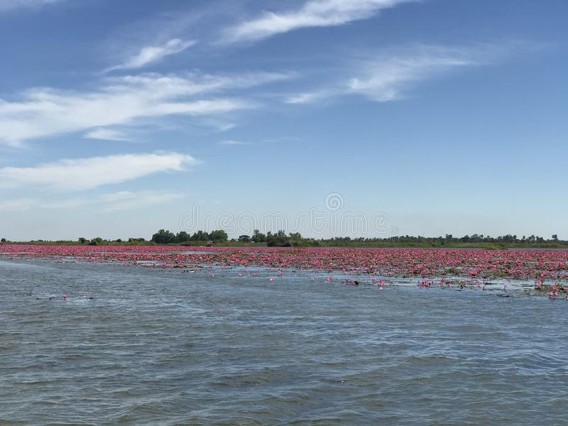 Red lotus sea in Udonthani, Thailand. Place for travel trip in Thailand royalty free stock image