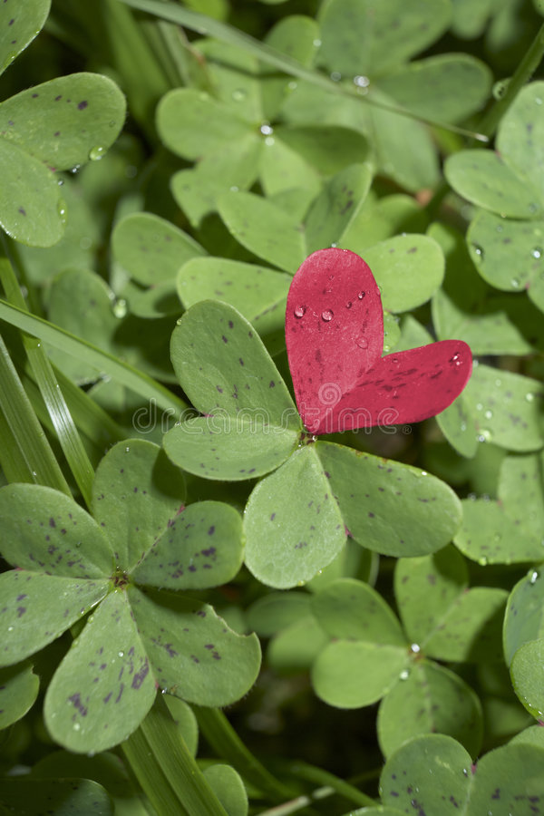 Free Red Love Heart Of Clover Royalty Free Stock Image - 7991616
