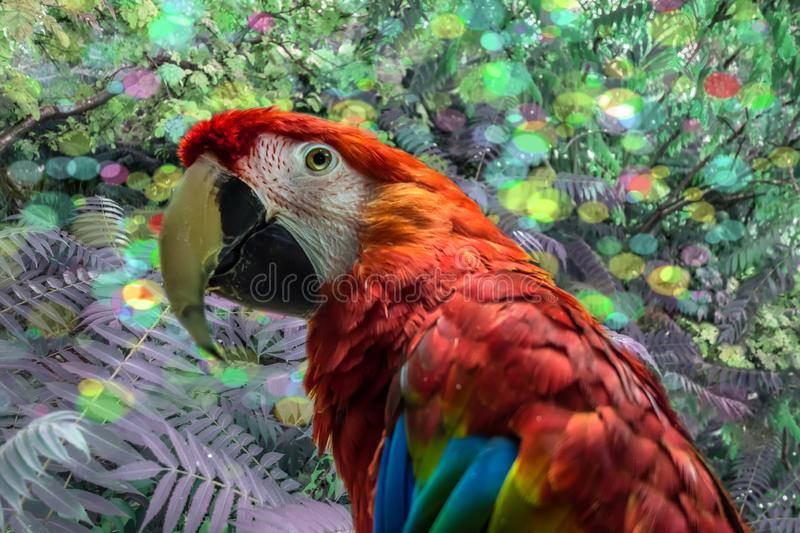 Red cute funny macaw parrot ara. Bright beautiful cute funny bird of red, blue, yellow feathered ara parrot outdoor on green natural background royalty free stock images