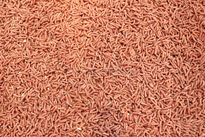 Red maggot worm bait for fishing. Closeup stock images