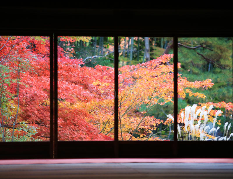 Red maple with the Japan out of window stock images