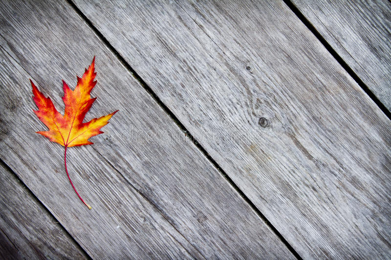 Download Red maple leaf stock image. Image of texture, october - 21530817