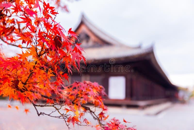 Red maple tree in Japan shrine autumn season. Travel background royalty free stock photos