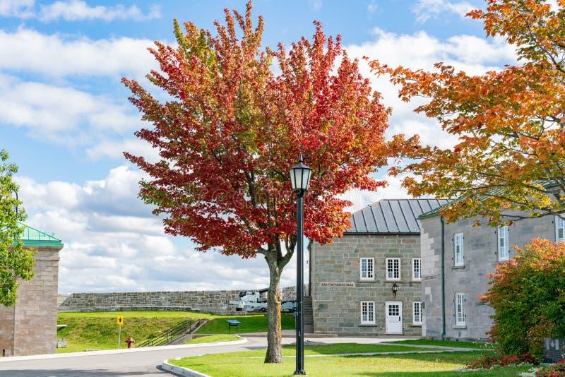 Red maple tree in the La Citadelle de Quebec. At Quebec, Canada royalty free stock photos