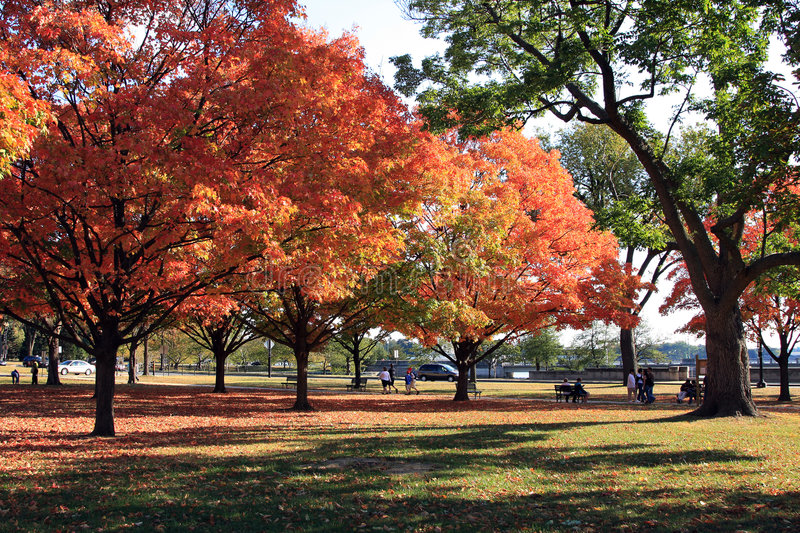 Red maples on the Washington mall