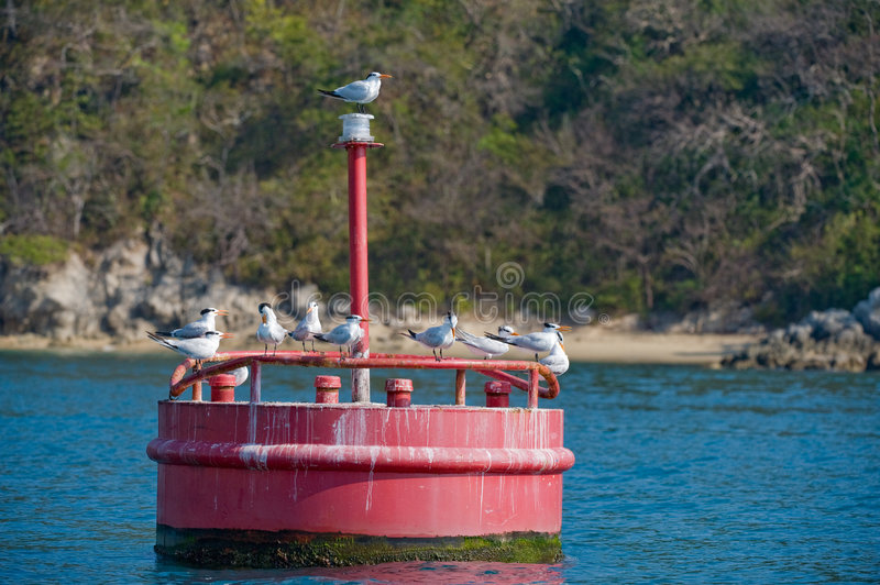 Download Red maritime marker buoy stock image. Image of perching - 7363185