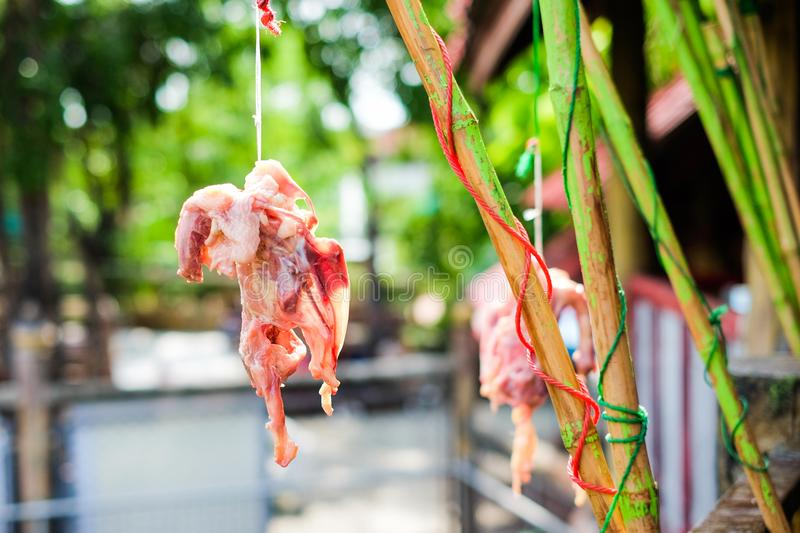 Red meat chicken skeleton hang on green bamboo for animal. Red meat chicken skeleton hang on green bamboo for animal feed crocodile, tiger, lion, vulture, hawk royalty free stock photography