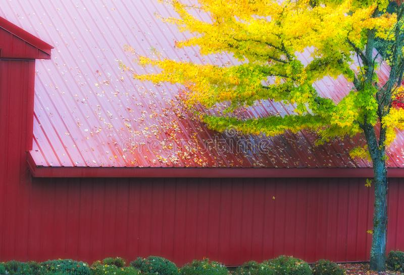 Red Barn and Autumn colored leaves. A red metal barn glistens from a misty fall rain as the turning yellow leaves of a tree draws the eye in contrast royalty free stock photo