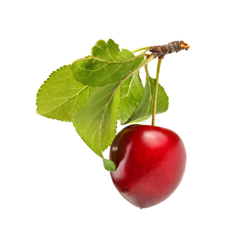 Red mirabele plum Prunus domestica syriaca with green leaf and stem isolated on white background royalty free stock photography