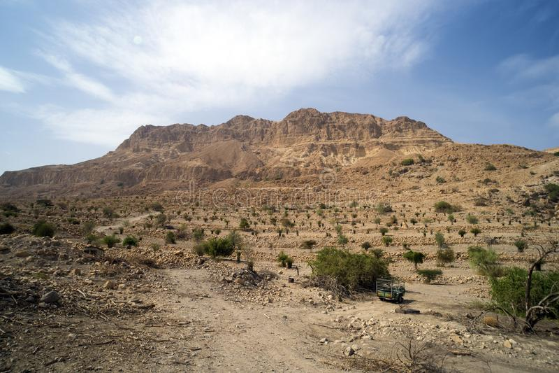 Red mountain in Ein Gedi National park, Israel. Agricultural plantation in an oasis in the Desert. High cliff on the background of. The cloudy sky. Wallpaper royalty free stock photography