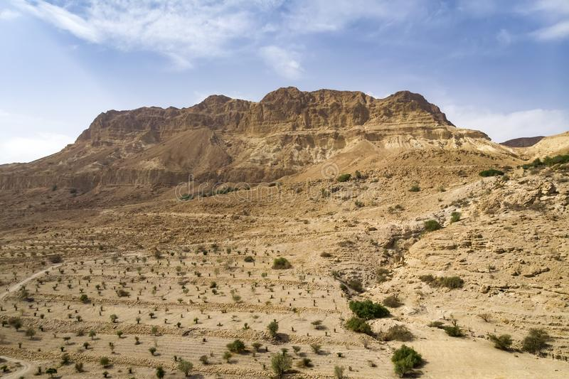 Red mountain in Ein Gedi National park, Israel. Agricultural plantation in an oasis in the Desert. High cliff on the background of. The cloudy sky. Wallpaper royalty free stock photo