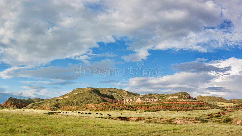 Red Mountain Open Space panorama. Mountain ranch landscape in northern Colorado near Fort Collins, summer scenery stock image