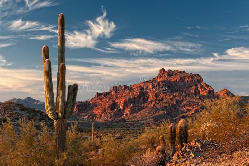 red mountain and saguaro cactus stock image