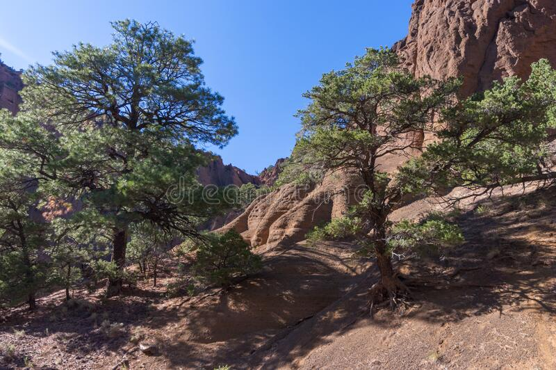 Red Mountain Trail No. 159 stock photography