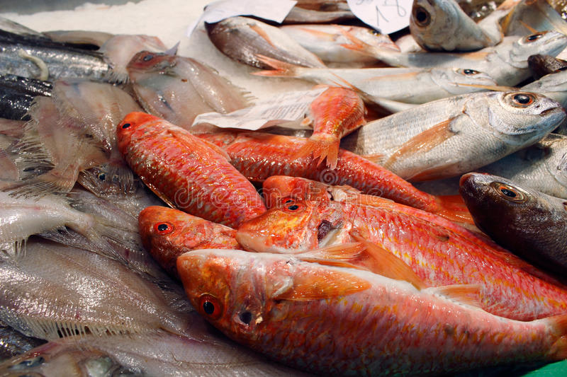 Red mullet royalty free stock image