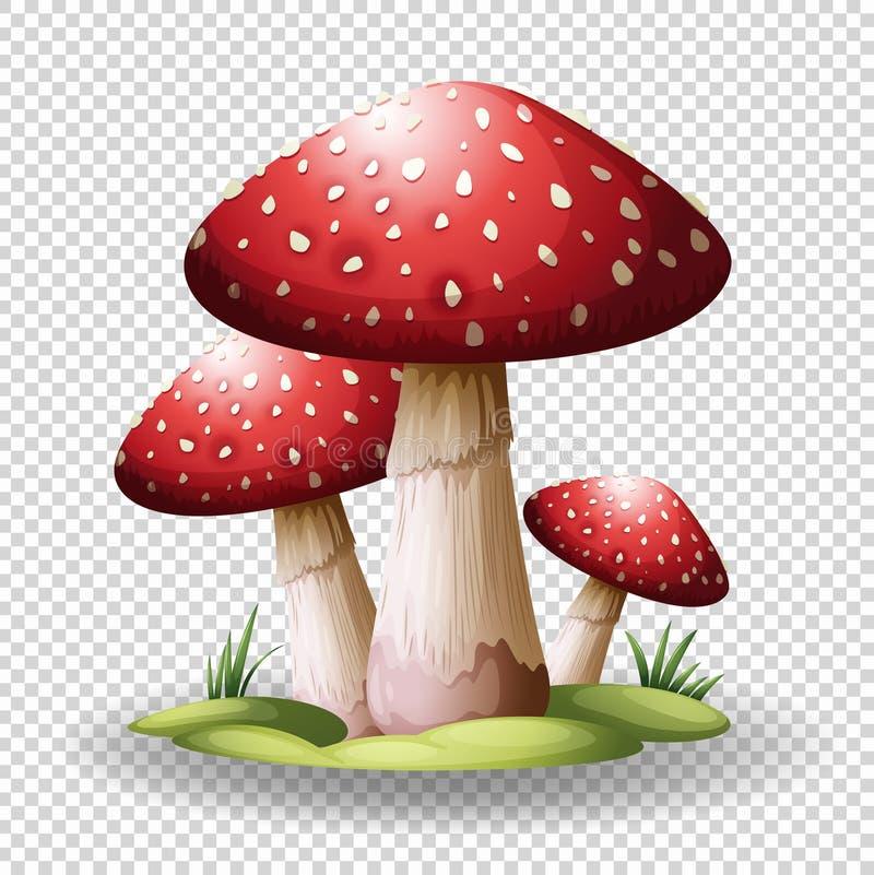 Red mushrooms on transparent background stock vector illustration download red mushrooms on transparent background stock vector illustration of food illustration 93036332 toneelgroepblik Gallery