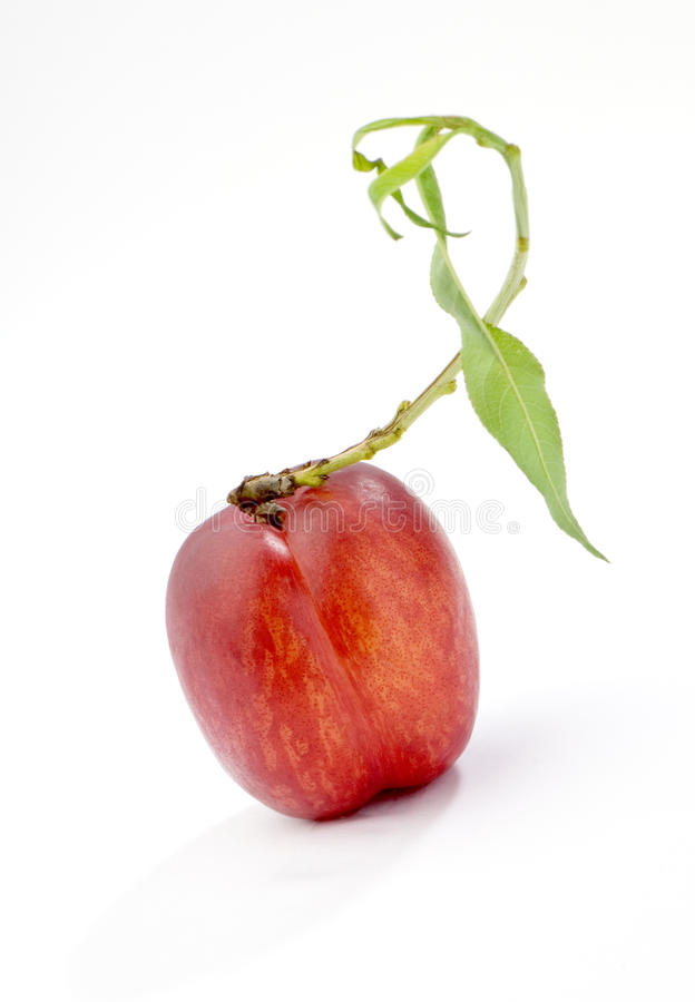 Red nectarine. Nectarine with green leaf on a branch on white studio shot stock photos