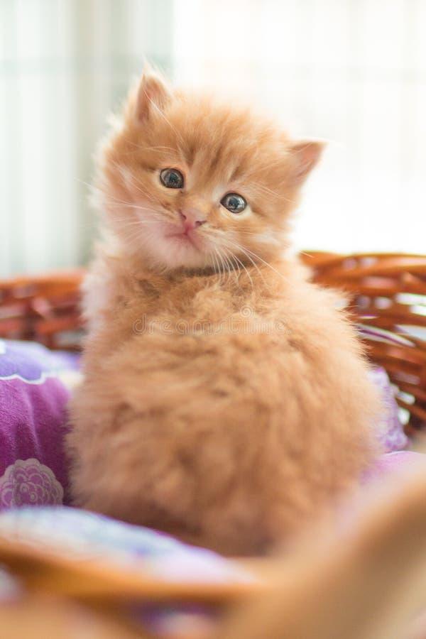 Red newborn kitten stock photo