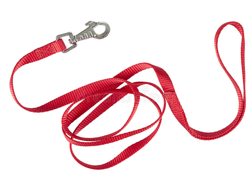 Red nylon dog lead or leash isolated over white stock image