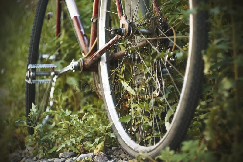 Old rusty Bicycle is abandoned and overgrown with grass royalty free stock photos