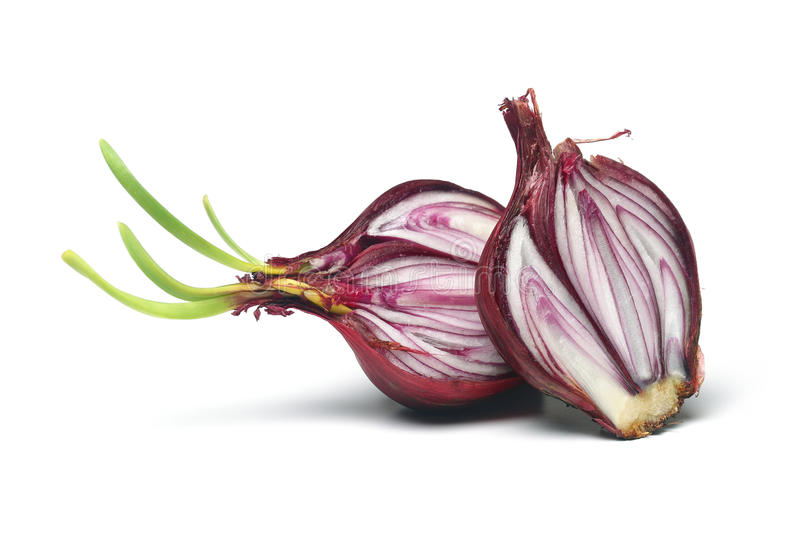 Download Red onion stock image. Image of meal, green, ingredients - 25288629