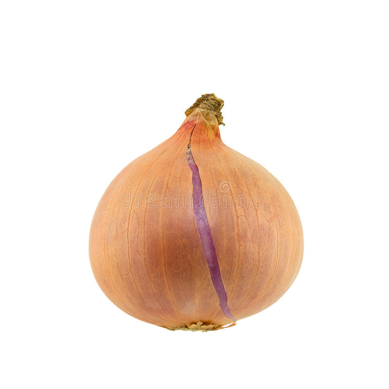 Red onion isolated on white. Background stock images
