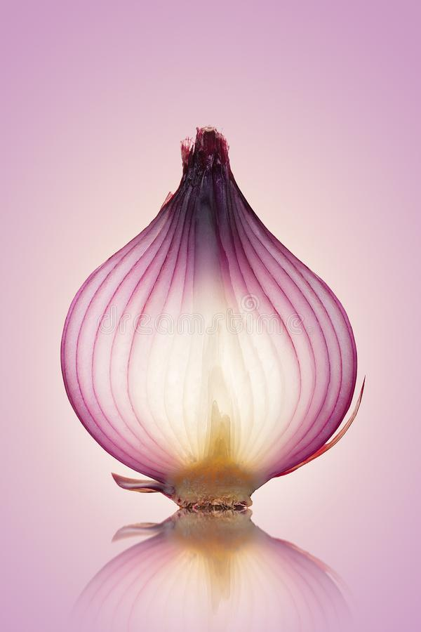 Red Onion Translucent layers stock photography