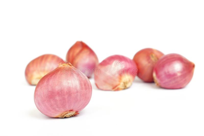 Red onions. On white background royalty free stock photos