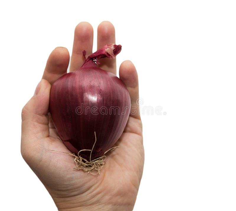 Red onions in a hand on a white background.  royalty free stock photos