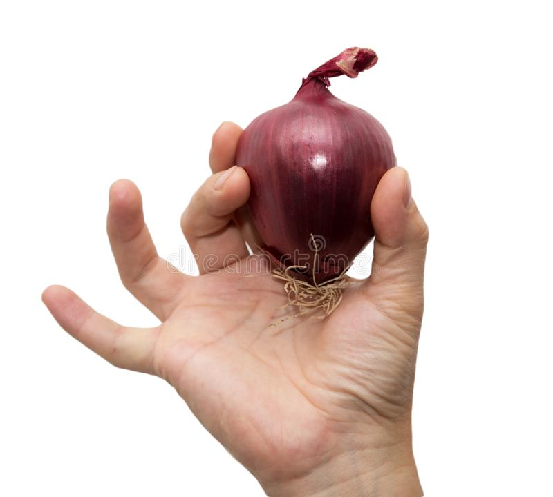 Red onions in a hand on a white background.  stock photo