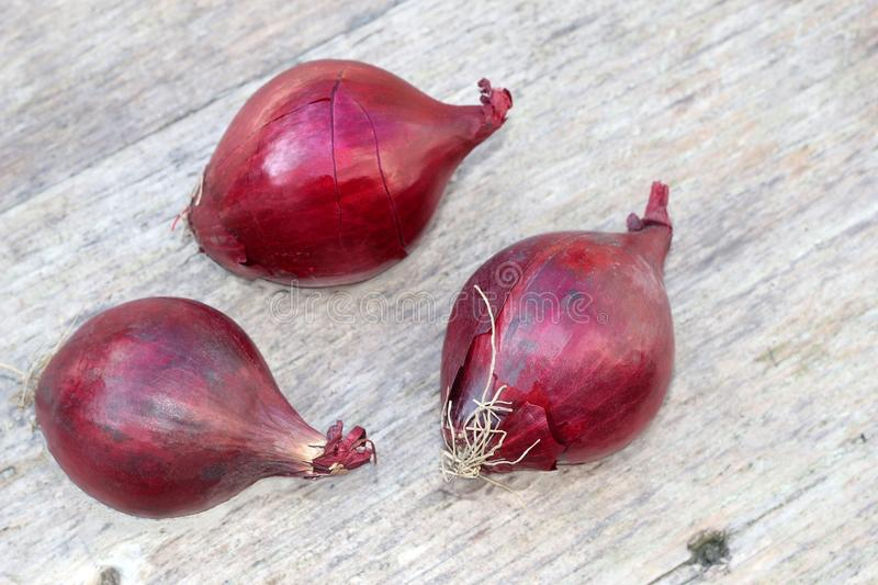 Three red onions on a background of old wood royalty free stock photography
