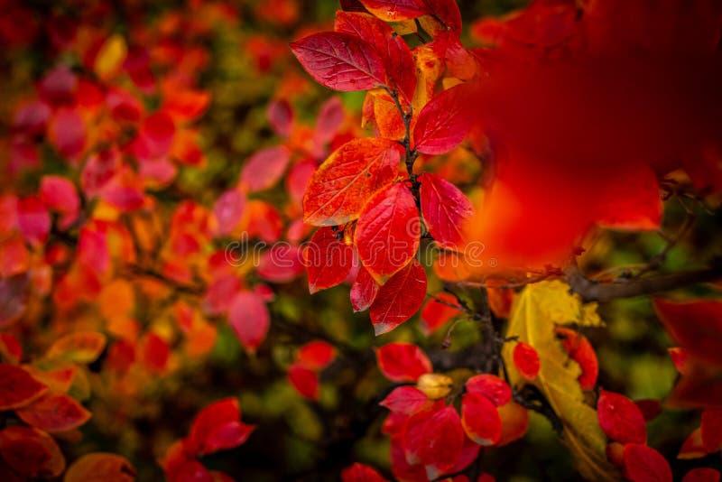 Red And Orange Autumn Leaves Background. Free Public Domain Cc0 Image