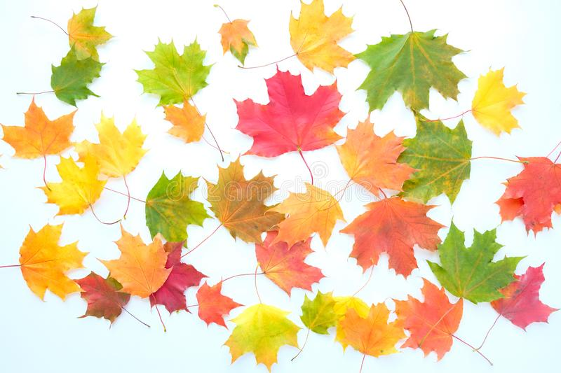 Red and Orange Autumn Leaves Background. On white background. Red and Orange Autumn Leaves Background. Maple leaves stock photography
