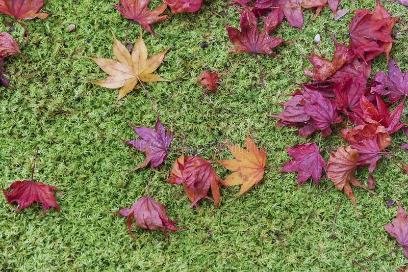 Red and orange autumn leaves background. Outdoor. Colorful backround image of fallen autumn leaves perfect for seasonal use royalty free stock photography