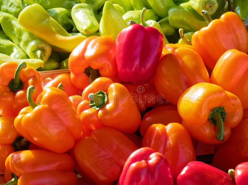 Red and Orange Bell Peppers For Sale at Market. Bright red and orange bell capsicums or peppers for sale at a fresh fruit and vegetable market or shop, with pale royalty free stock photo