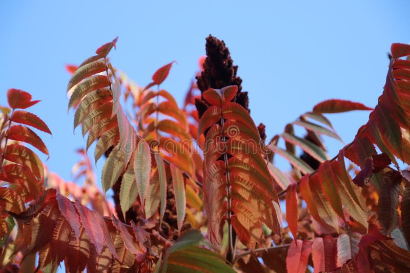 Red, orange and brown leaves during the autumn season in the sun at trees stock photo