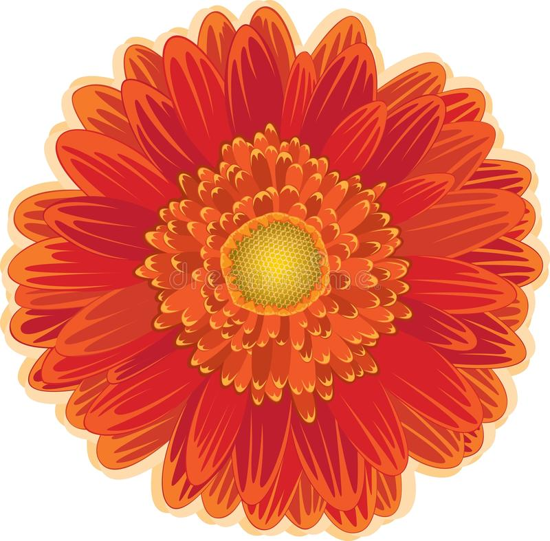 Download Red And Orange Daisy Flower Stock Vector - Image: 14800937