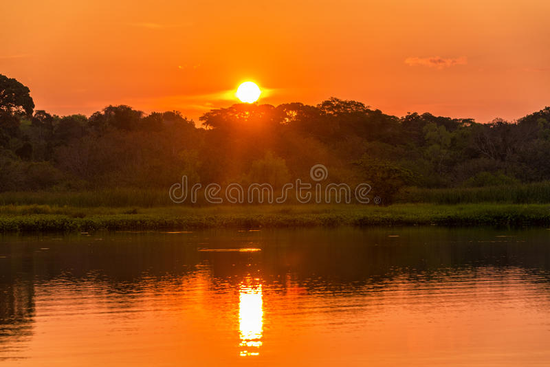Red and Orange Jungle Sunset royalty free stock images