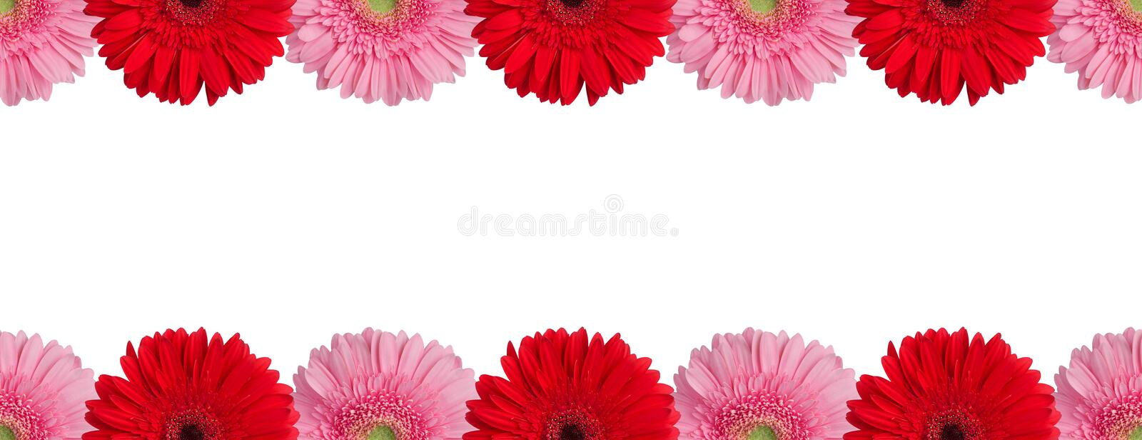Red, orange and pink gerbera flowers border on white background isolated closeup, gerber flower seamless pattern, decorative frame royalty free stock photography