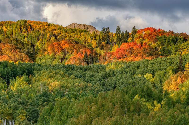 Red, orange, yellow and green aspen tree leaves while an autumn storm forms overhead. stock images