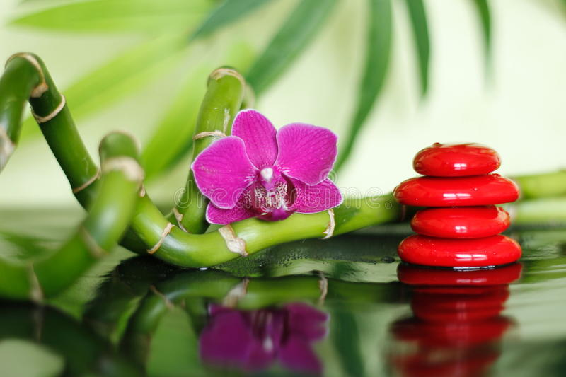 Red pebbles arranged in Zen lifestyle with an orchid and bamboo branch on shiny floor. Pebbles arranged in Zen lifestyle with an orchid and bamboo branch on stock photos