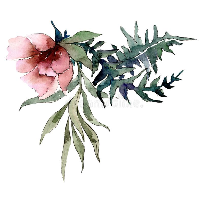 Red peony flower with green leaves. Isolated bouquet illustration element. Watercolor background illustration set. stock illustration