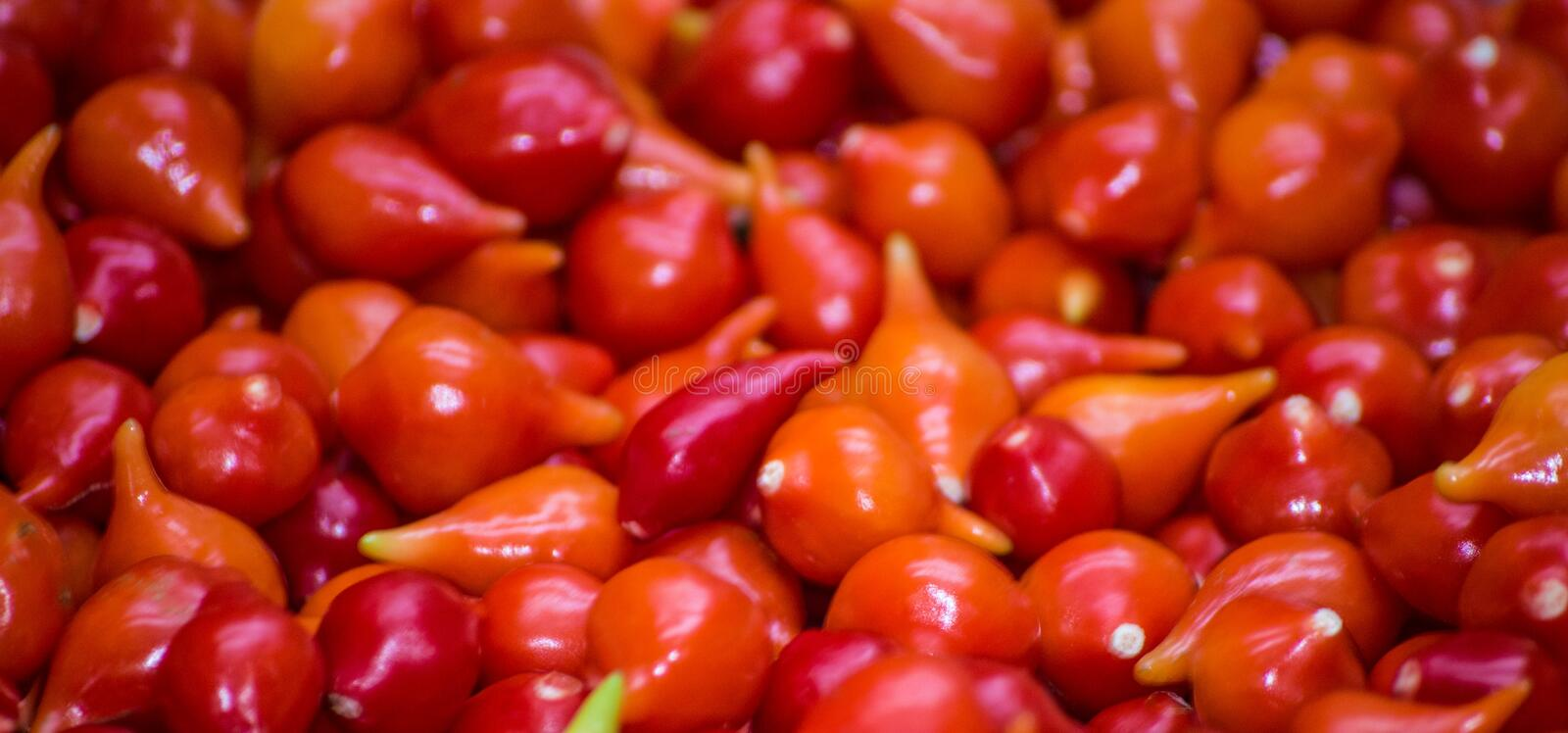 Red peper in amazing closeup, picked in popular market, exposed to sale. royalty free stock photos