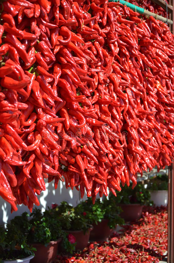Download Red pepper series stock image. Image of color, harvest - 26393737